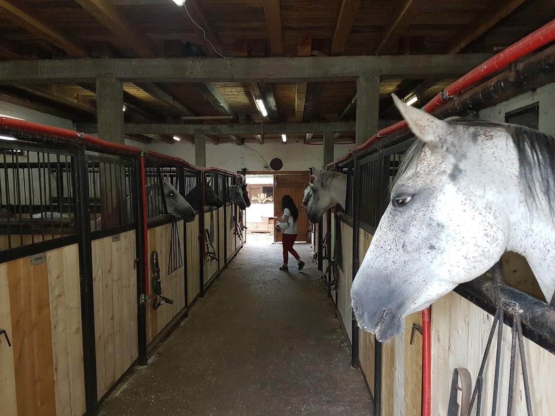 Štala konjičkog kluba Hidalgo